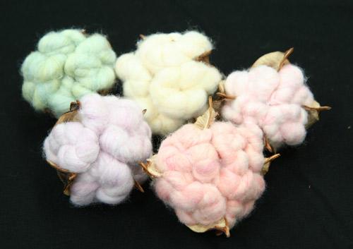 BotanicalDye Fabric