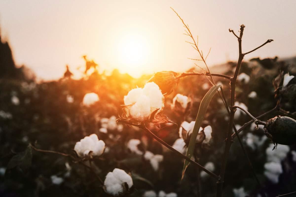 fabric dictionary organic cotton