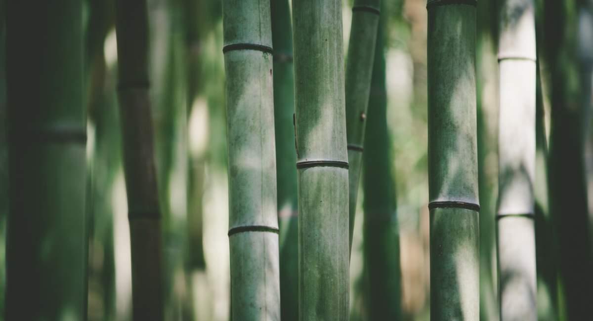 bamboo fabric dictionary